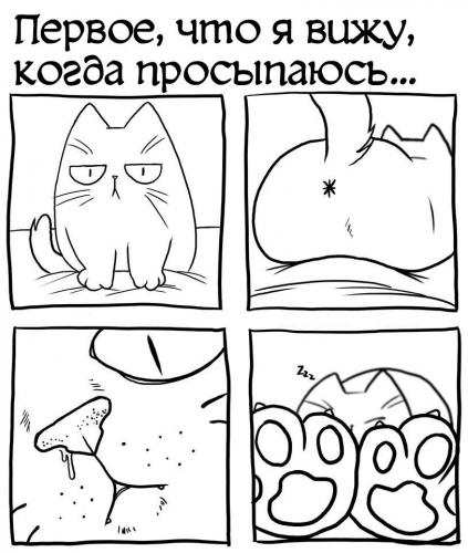 Котомудрости